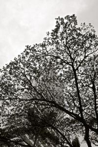 treesmaller